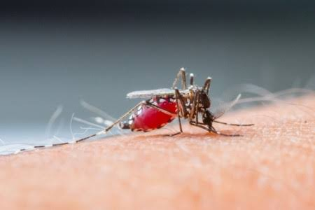 Malária: após anos em queda, os casos voltam a aumentar no Brasil